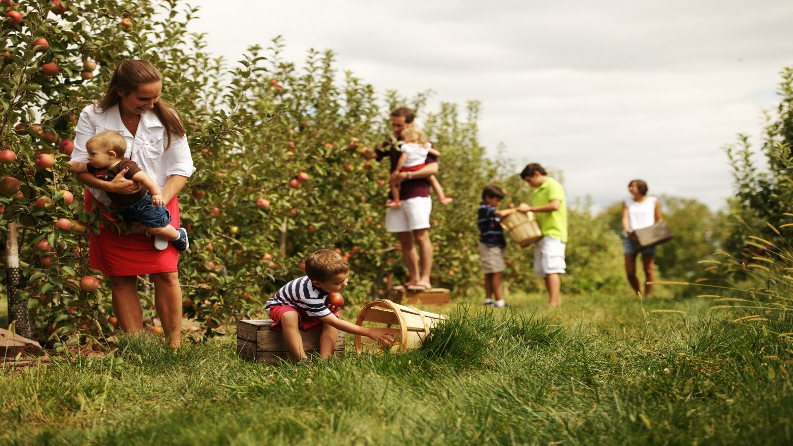 Things to do in Gettysburg, PA - Apple Picking